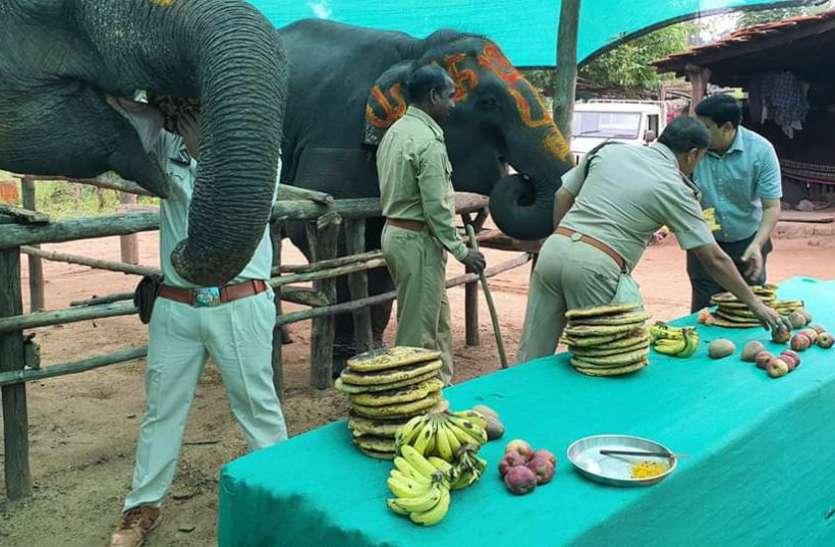 जानें क्यों की गई हाथियों की आवभगत, खिलाया मनपसंद खाना