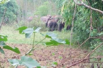 wild elephants in india: गांव को जंगली हाथियों ने घेरा, नीद खुली तो चारों तरफ आतंक मचाए थे हाथी, दहशत का माहौल