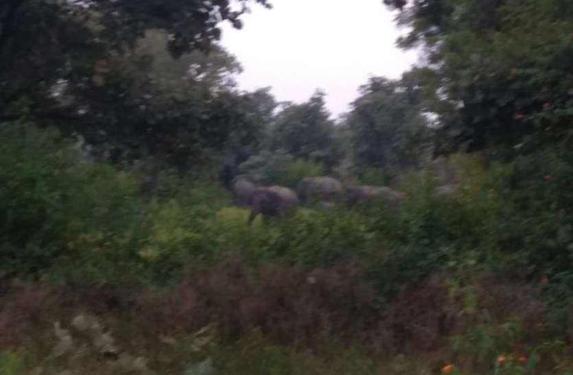 मप्र. की वन सीमा लांघ वापस छत्तीसगढ़ लौटा हाथियों का दल