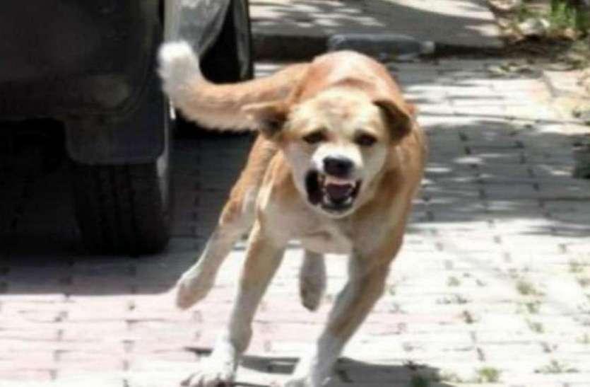 आवारा कुत्तों से परेशान हाे गए महानगरवासी, सरकार से लगाई गुहार