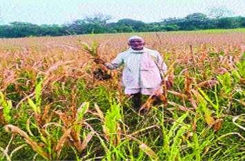 मौसम बदलने से बढ़ी किसानों की चिंता