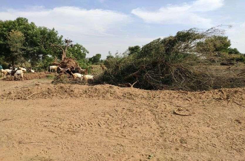 महाराष्ट्र में आरे जंगल की कटाई के बाद राजस्थान में यहां विकास के नाम पर बिना अनुमति काटे हजारों पेड़, जंगल हुआ साफ