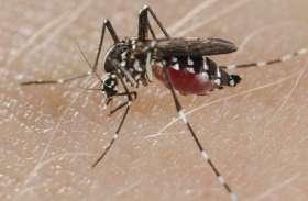 ग्रामीणों को लगातार डंक मार रहे हैं डेंगू का मच्छर, पांच दिनों में आठ पहुंच अस्पताल