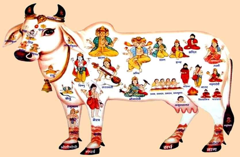 गोपाष्टमी चार नवंबर को, गाय और गोविंद की पूजा से आएगी सुख-समृद्धि, जाने शुभ मुहूर्त और पूजा विधि