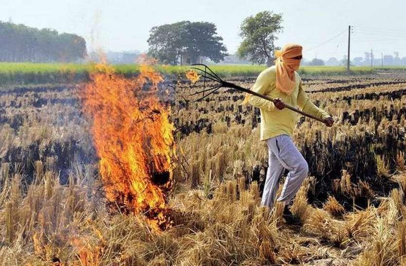 दिल्ली-हरियाणा की तरह जबलपुर में भी जलाई जा रही पराली,  बढ़ा प्रदूषण का खतरा!!!