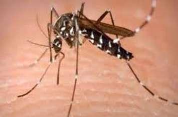 डेंगू का डंग, डेंगू पीडि़त की हुई मौत