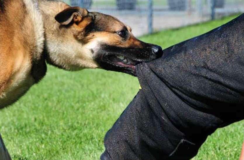 आवारा कुत्तों ने मचाया आतंक, 7 लोगों को बुरी तरह काटा, ग्रामीणों में दहशत