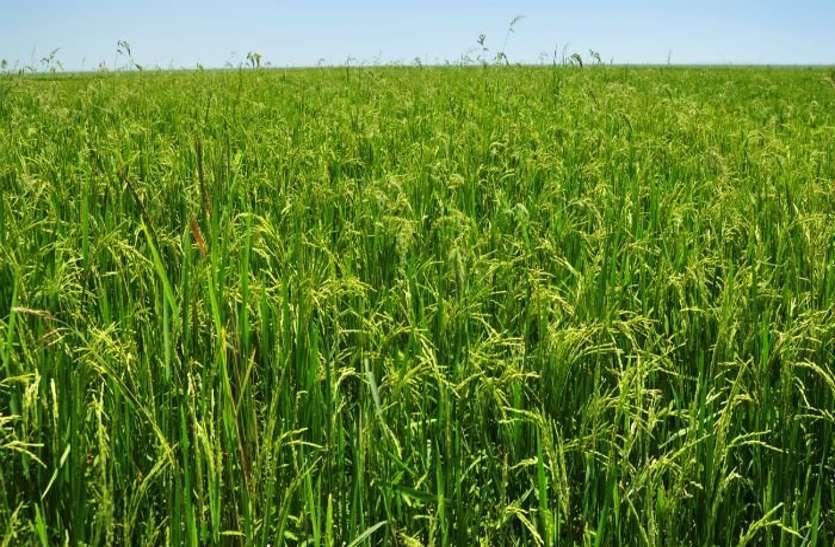 इस साल किसानों की संख्या में हुई बढ़ोतरी, साथ ही 6 प्रतिशत तक बढ़ा खेती का क्षेत्रफल