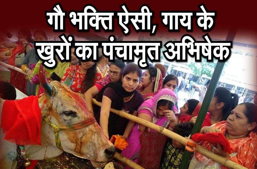 गोपाष्टमी का उल्लास, गाय पूजने के लिए भीड़