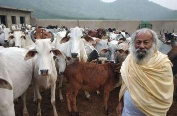 यह हैं झुंझुनूं के गाय वाले बाबा, पाल रखी है 700 गाय