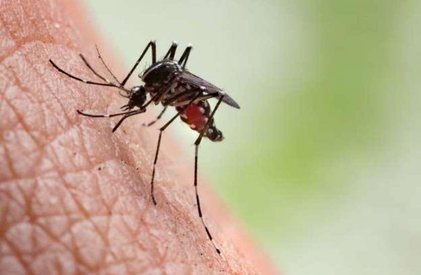 डेंगू है या कोई और वायरस...कंफ्यूज!