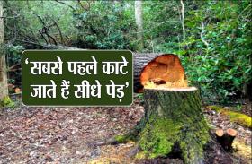 'सीधे पेड़ सबसे पहले काटे जाते हैं, इसलिए ज्यादा ईमानदारी भी सही नहीं है'