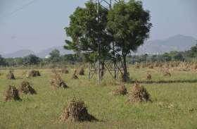 बेमौसम बारिश में भीगी खेतों में रखी फसल