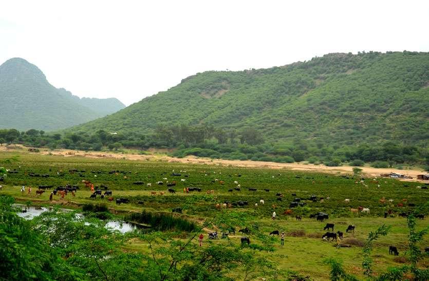 12 साल से फाइलों में रेंग रहा बीसलपुर वन क्षेत्र के विकास का सपना