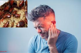 इस शख्स के कान के अंदर कॉकरोच ने बसा रखी थी पूरी कॉलोनी, लेकिन उसके बाद हुआ ऐसा....