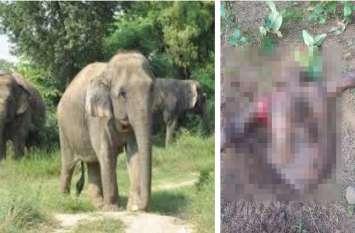 हाथियों ने शिक्षक को घेर लिया और फुटबॉल बनाकर खेला, सुबह टुकड़ों में लाश देख सिहर उठे गांव वाले, दी ये चेतावनी