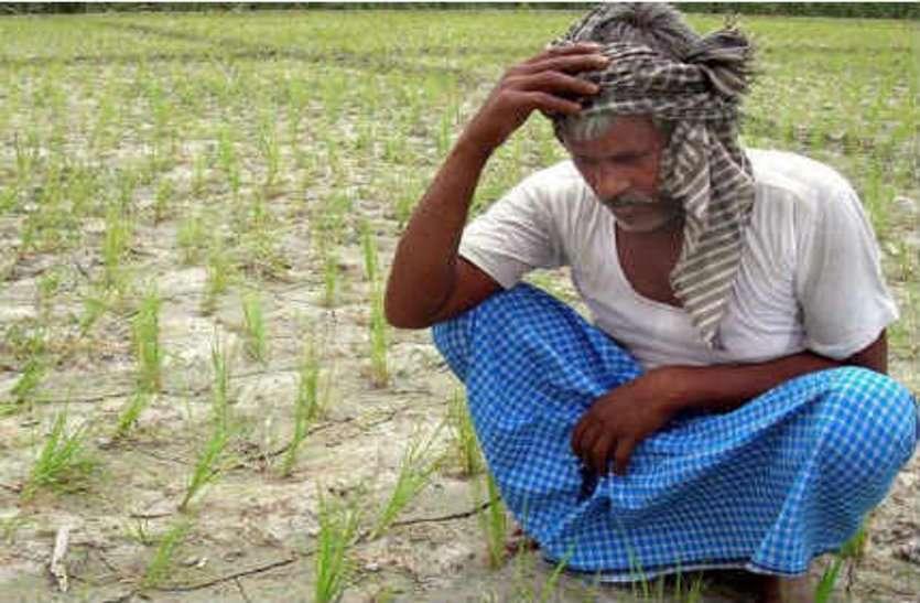 प्रदेश में किसानों को बेचे गए 950 से ज्यादा नकली खाद-बीज और पेस्टीसाइड के प्रोडक्ट