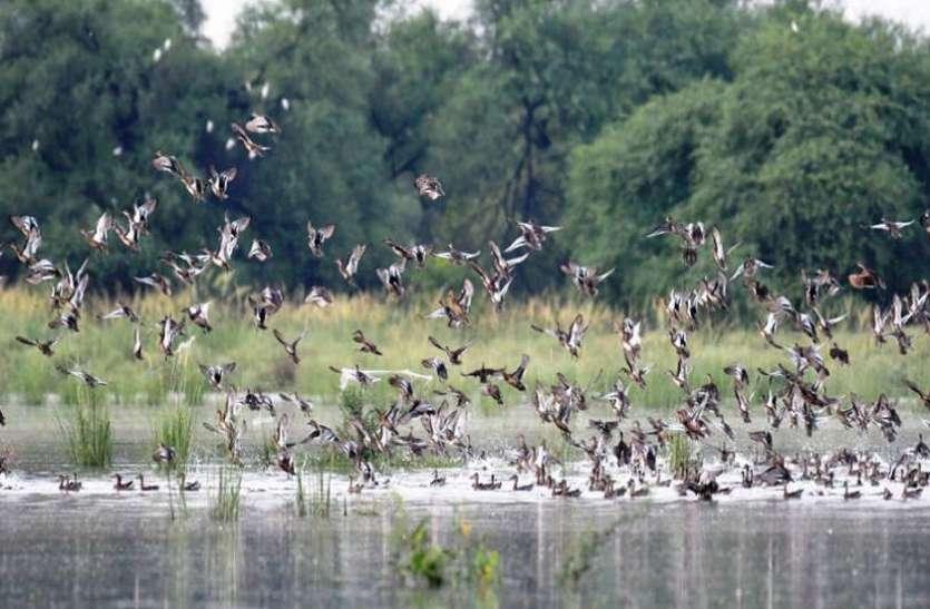 प्रवासी पक्षियों का आगमन शुरू, सेंध व खांडवा जलाशय बने आकर्षण का केंद्र