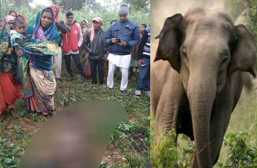 सोनभद्र में जंगली हाथियों का उत्पात, एक की मौत, दहशत में इलाके के लोग