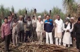 Video: बिजली की लाइन की वजह से किसानों को हुआ बड़ा नुकसान, हंगामा