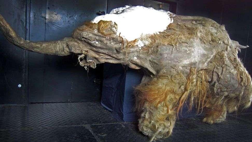 क्या फिर से ज़िंदा हो जाएंगे 28 हज़ार साल पहले लुप्त हो चुके विशालकाय ''मैमथ' !