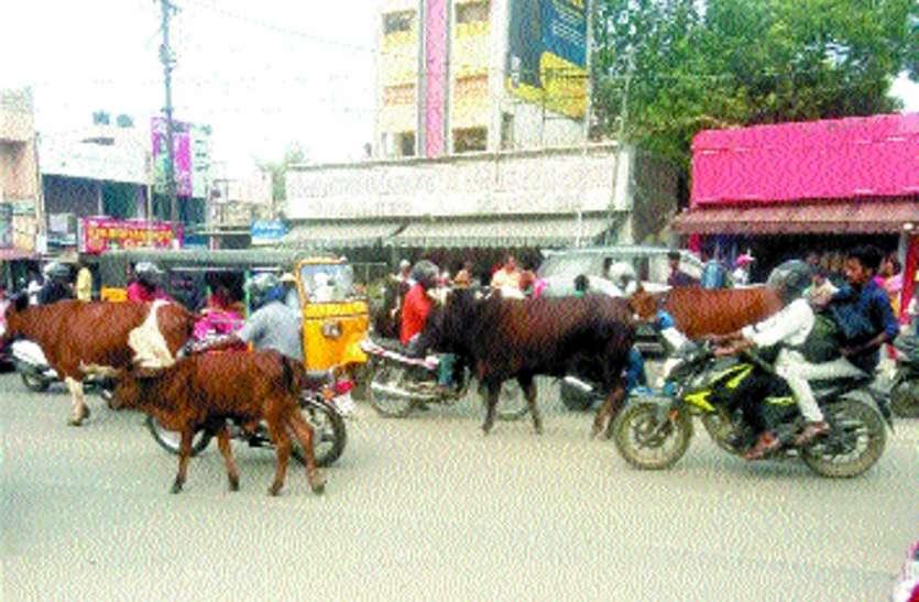 सड़क पर मवेशी को लेकर हाई कोर्ट ने प्रदेश के सभी नगर निगमों को नोटिस जारी किया