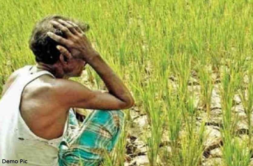 किसान कर्ज माफी के लिए ग्लोबल पोर्टल पर अभी मात्र 537 रुपए का बैलेंस