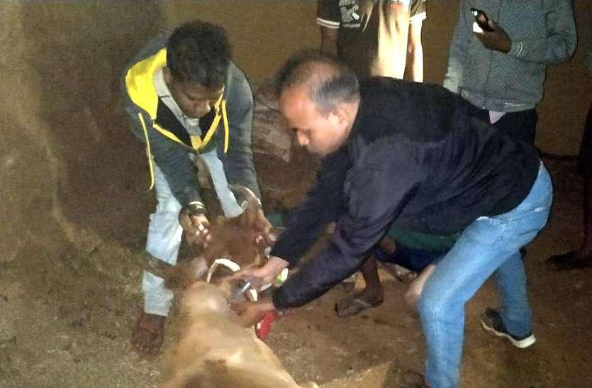 कृषि मंत्री के क्षेत्र में 200 से ज्यादा मवेशी बीमार, एक की मौत, 80 की हालत गंभीर, पशुधन विभाग में मचा हड़कंप
