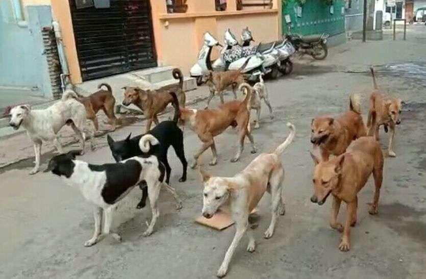 VIDEO रतलाम में हर साल पांच हजार से अधिक लोगों को काट रहे कुत्ते