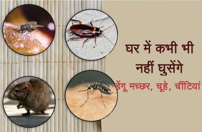घर में मच्छर, चूहे, चींटी या कीड़े मकोड़ों से हैं परेशान, ये खास तरीके आएंगे आपके काम