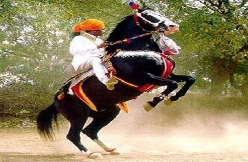 हॉर्स शो में नायाब करतब दिखाएंगे 'घोड़े'