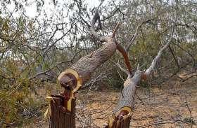 मुंबई पुणे के बीच इस वजह से निर्दयीता से काटे जाएंगे 5500 पेड़
