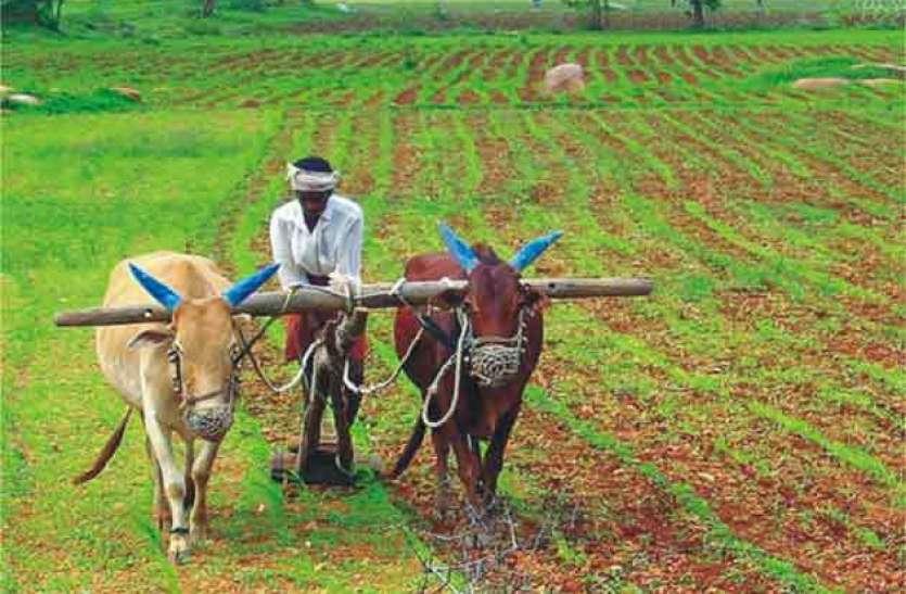 जिले के किसान स्टीविया की खेती कर कमा रहे लाखों रुपए, जानें कैसे होती है स्टीविया की फसल