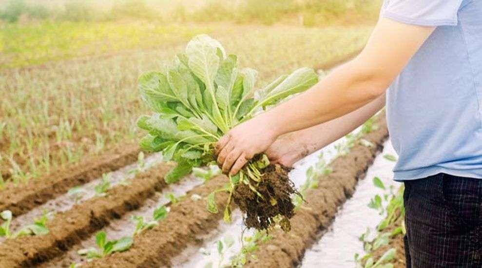 आदर्श खेत और कीटो डाइट की उन्नत खेती से मालामाल होंगे किसान