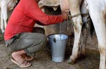कचनारिया की गाय ने 17 लक्ष्मणपुरा की भैंस  ने 23 लीटर दूध दे जीता पहला पुरूस्कार