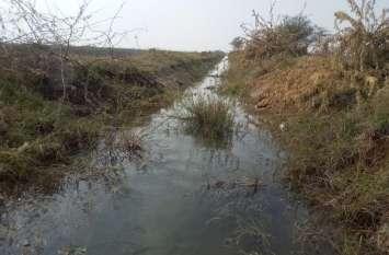 बीसलपुर की दांयीं मुख्य नहर में पानी आने से सफाई कार्य ठप, झाडियों एवं बिलायती बबूलों से अटी पड़ी है वितरिकाएं