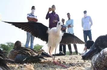 sambhar lake : आसमान नापकर आए पक्षियों का दो गज उडऩा भी हुआ मुश्किल