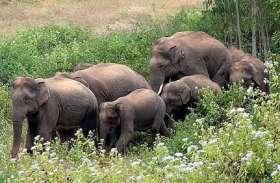 गांव के नजदीक पहुंचा जंगली हाथियों का दल, वन विभाग ने ग्रामीणों को दी चेतावनी