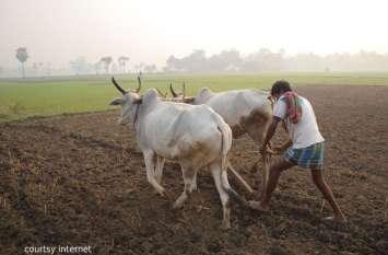 मौसम के मारे किसान किसे दें खराबे की जानकारी, कृषि पर्यवेक्षक और सहायक कृषि अधिकारियों के 72 फीसदी पद खाली !