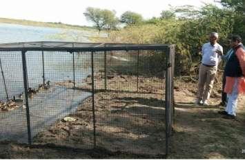 रहस्य बनी सांभर झील में प्रवासी पक्षियों की मौत !