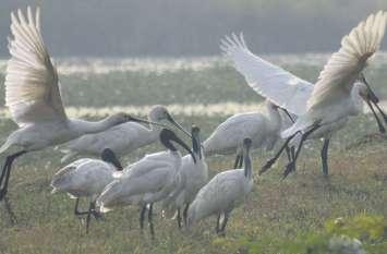 जलाशयों पर प्रवासी पक्षियों का कलरव ....देखें तस्वीरें