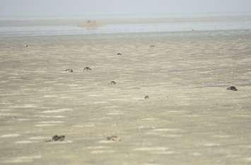 मृत पक्षियों का आंकड़ा 23 हजार पहुंचा, अब ड्रोन से ढूंढेंगे पक्षी