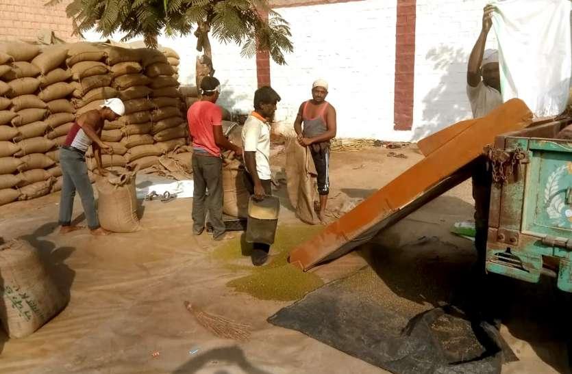 भोपालगढ़ केन्द्र पर 7 करोड़ रुपए की मूंग खरीद