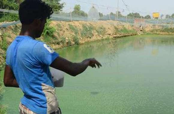 मछलियां करोड़ों कमाकर दे रही, विभाग जागे तो और दे सकती है