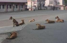 कुत्तों के आतंक से परेशान होकर लोग सड़क पर उतरे, रखी मांगे