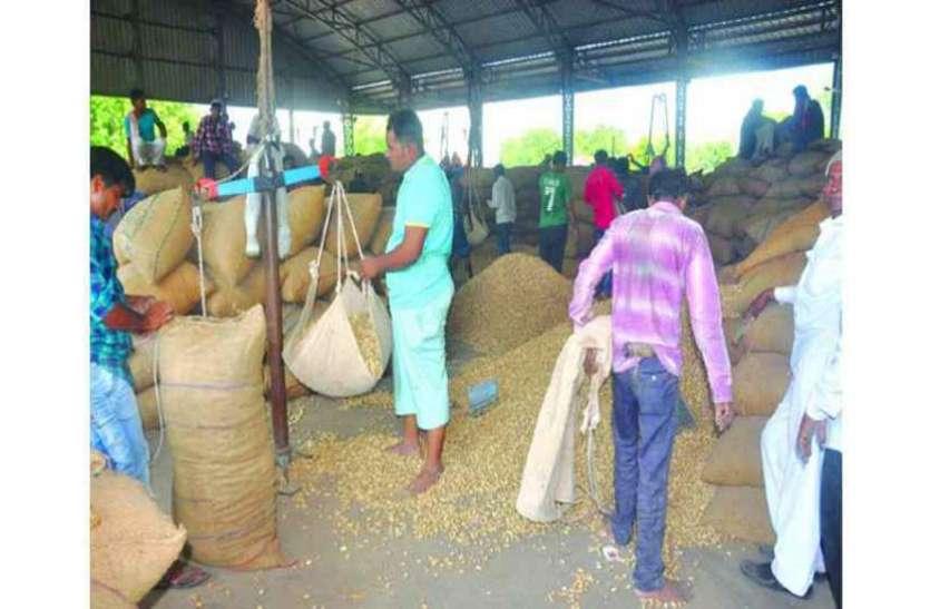इस कारण से reject हो गई १३० किसानों की groundnut