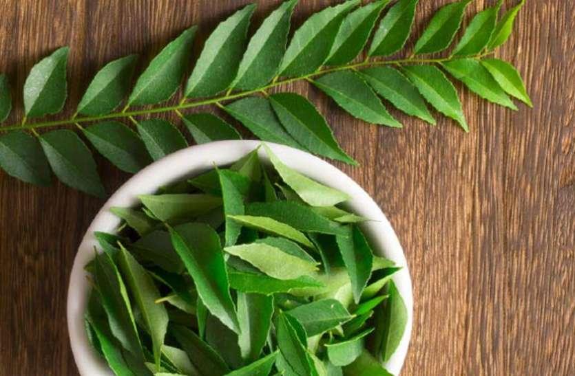 Curry Leaves Health Benefits - करी पत्ती में छिपे हैं ढेरों औषधीय गुण |  Patrika News