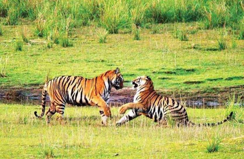 State Government Will Make Guru Ghasidas National Park A Tiger Reserve -  केंद्र सरकार का प्रस्ताव ख़ारिज, राज्य सरकार बनाने जा रही गुरू घासीदास  उद्यान को प्रदेश का चौथा ...