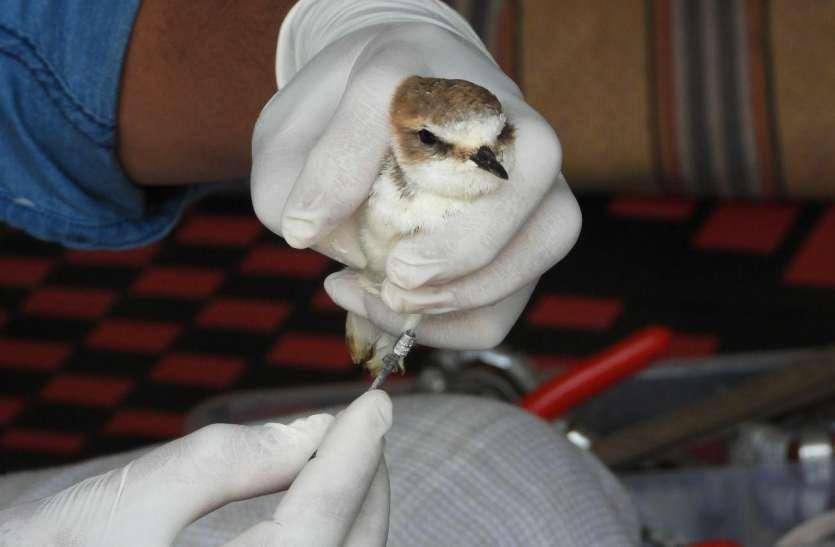 कलक्टर के आदेश : सांभर झील में नहीं रहे एक भी मृत पक्षी