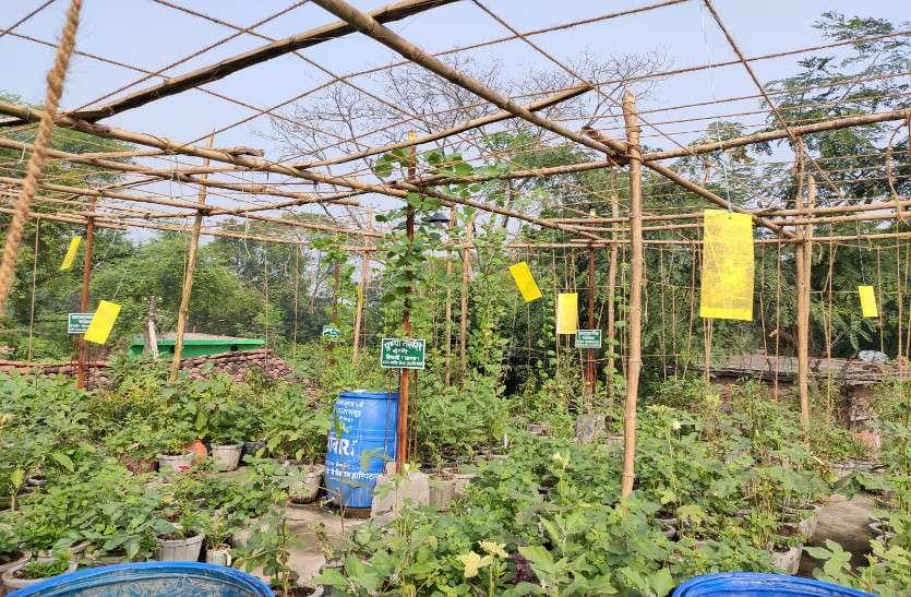 घर की छत पर चार सौ गमलों में लहलहा रही सब्जी की फसल
